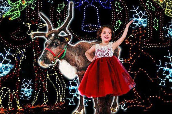 Christmas_Zoo.jpg